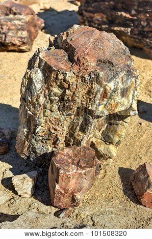 Petrified Forest, Namibia