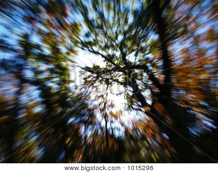 a blur of fall colors of trees poster