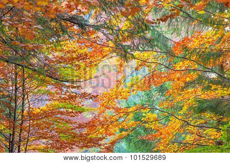 Colorful Autumn Leaves - beautiful sesonal horizontal background, fall in the forest