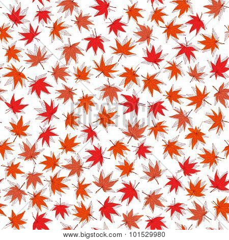 Autumn texture. Seamless pattern with momiji leaves.