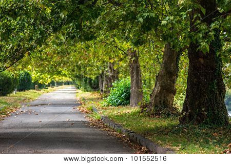 Path In Autumn City Park