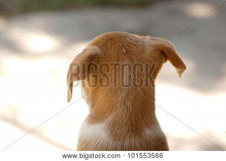Pictrure of a Cute puppies. Pet and animal theme