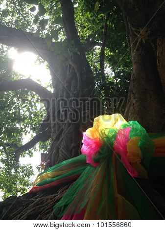 """believe and faithful about """"Boh-tree"""" in Thailand poster"""