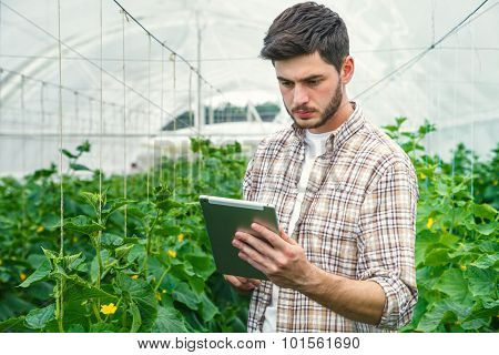 Young man recording measurements in a greenhouse