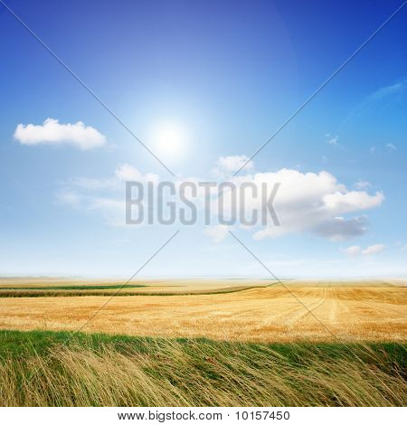 Landscape In The Summer