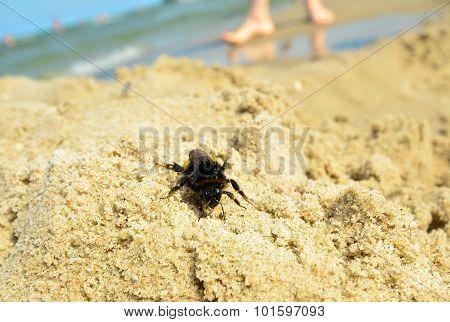 Danger insect bite