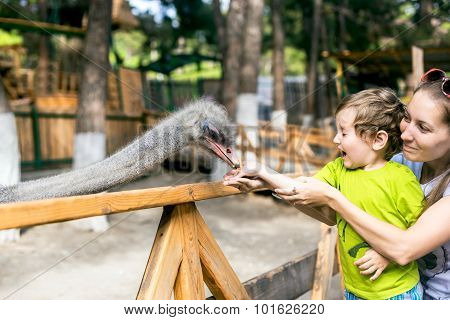 Strauss Takes Food From The Hands Of A Child