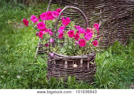 Wicker Basket With Natural Petunia Flowers