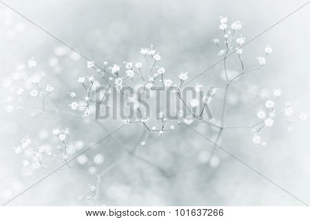 Small De-focused White Flowers With Vintage Effect