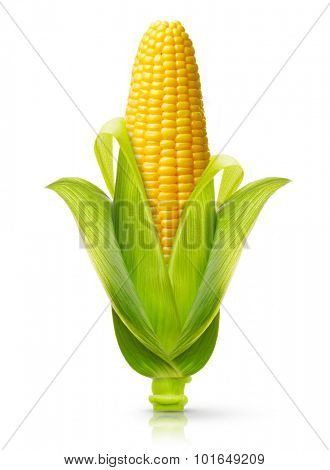 Ear of corn isolated on a white background. Fresh corncob.