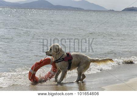 Rescue Dog With Lifebelt