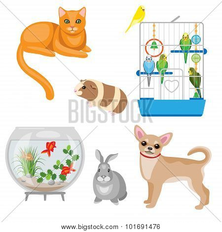 Set of pets and other animal companions. Cat dog rabbit guinea pig budgies in the cage and aquarium with fishes isolated on white. poster