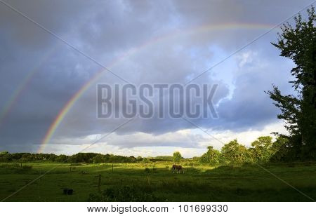 Sky And Rainbow After Thunderstorm Over A Wide Country Landscape With Horse
