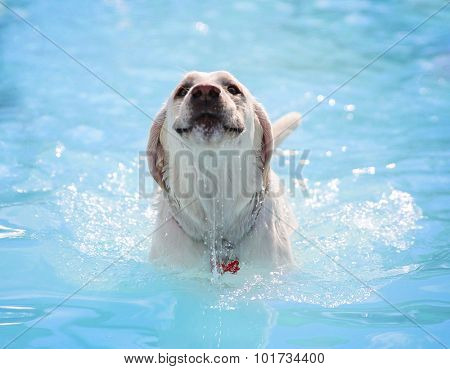 a dog swimming at a local public pool
