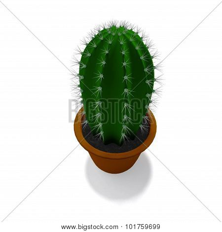 Cactus Plant In Isolated On White Background
