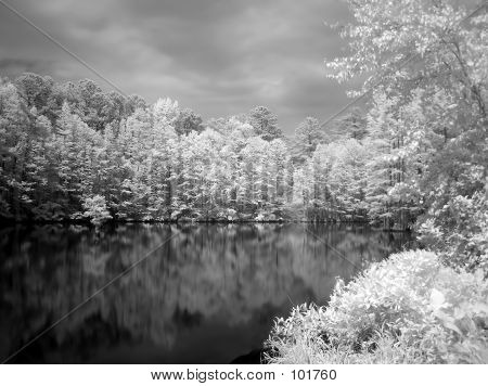 IR Cypress Trees