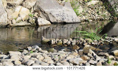 brook in summer