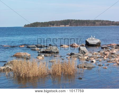 Sea Gulls Couple