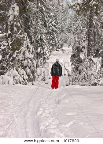 Winter Forest. Woman Skier