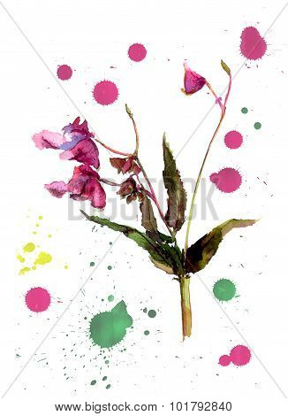 Balsam flower, jewelweed. Artistic Image With Botanical Flower Impatiens And Color Drops