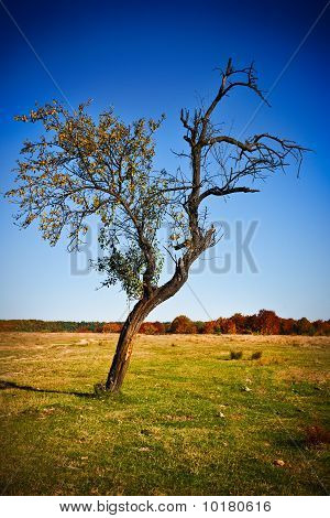 Solitary Tree In A Meadow