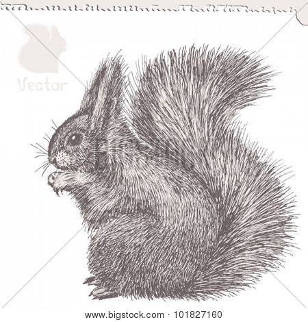 squirrel, hand-drawn ink sketch, vector illustration