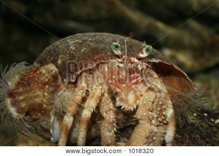 Crabs_1128