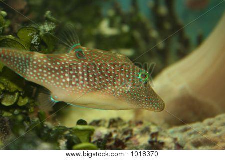 Red Sea Fish _1152