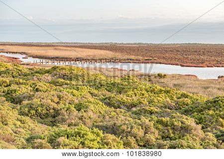 A pedestrian bridge in the wetlands at Papendorp a small village at the Olifants River estuary on the Atlantic coast of South Africa poster