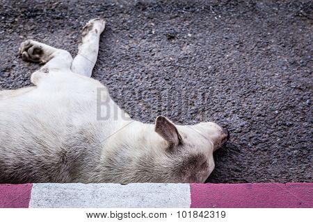 Diseased Stray Dog