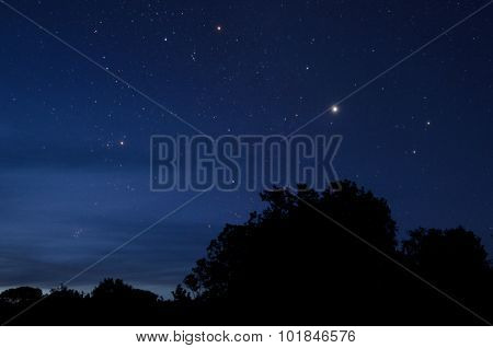 The Polaris star and night sky with trees skyline.