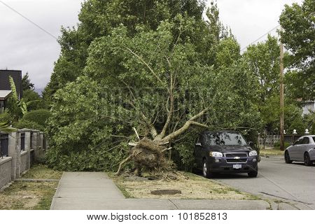 Wind uproots tree onto vehicle