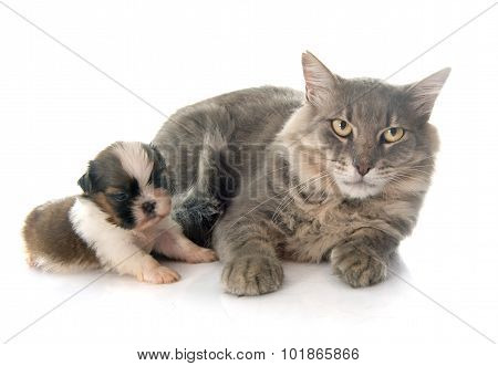 Adult Cat And Puppy