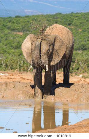 Male Elephant Drinking Water