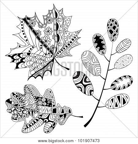 Set Of Leaf. Doodle Pattern. Automn Design. Stock Vector