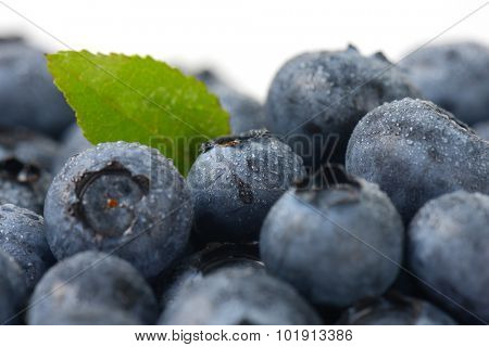 macro detail of fresh dewy blueberries with one green leaf