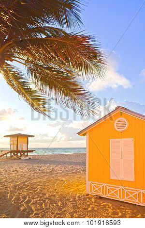 Palm trees and lifeguard house