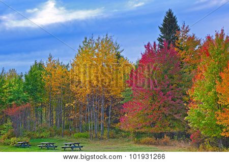Nature landscape Trees changing colors during autumn