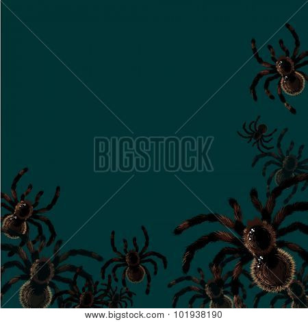 Halloween card with spiders, with a place for your text