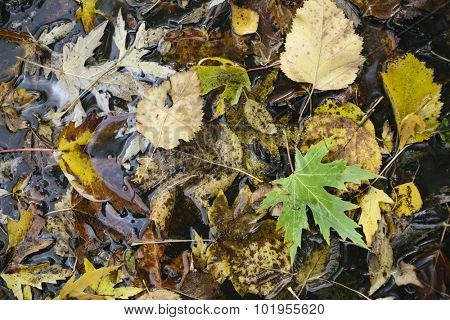 puddle of water with foliage