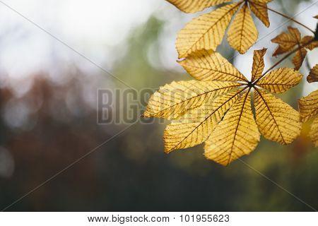 fall concept,selective focus