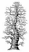 Family tree of life on earth, vintage engraved illustration. Earth before man - 1886. poster