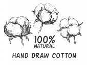 Vector set of hand draw ink cotton plant. Engraving illustration. Can be used as decor ellement for a rustic wedding or greeting cards poster
