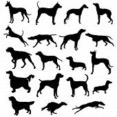 Set of silhouettes of hunting dogs in point and motion poster