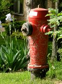 fire hydrant splashed with mortar and irises in cottage country ontario canada poster