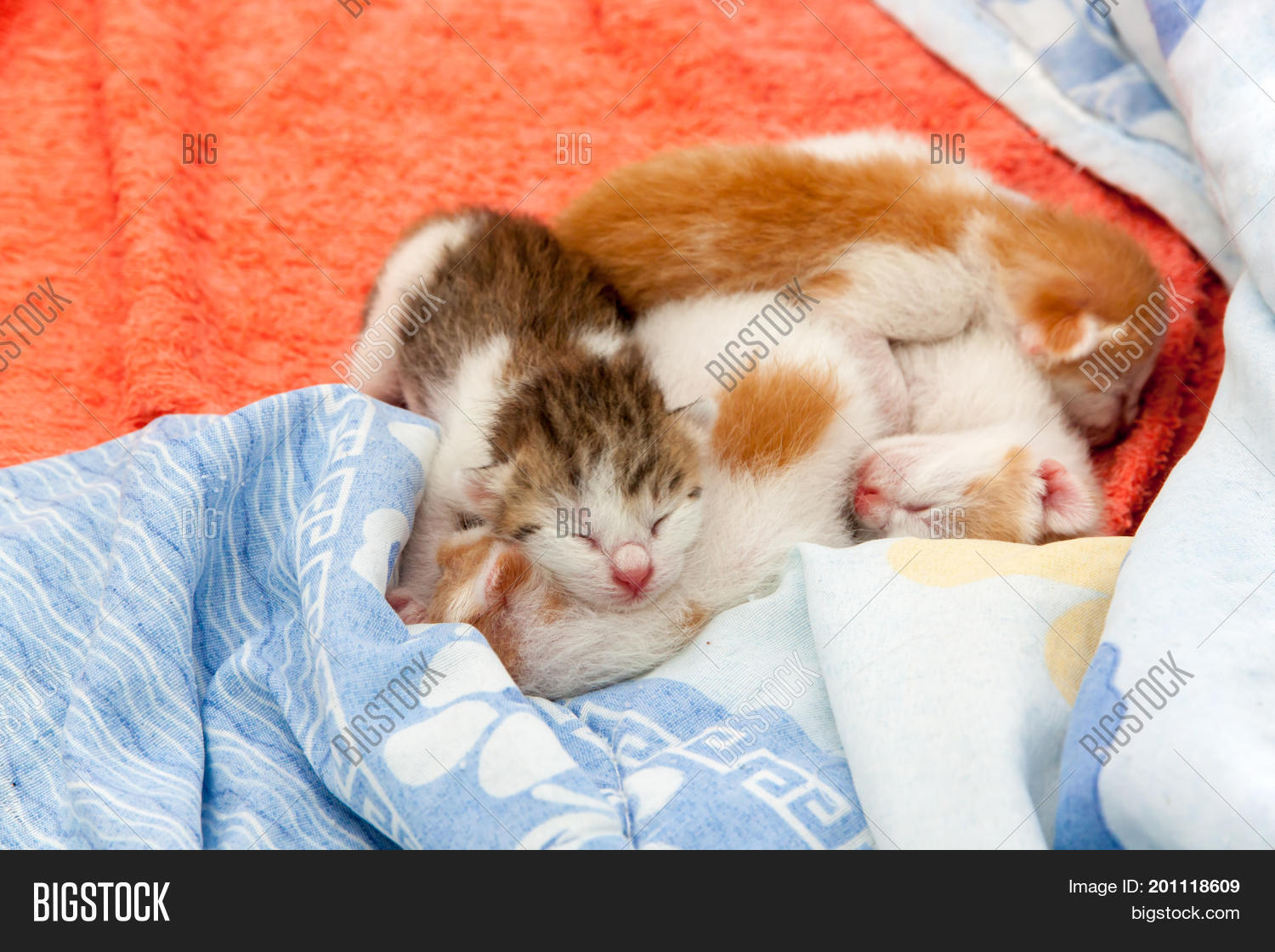 Small Kitten Which One Image \u0026 Photo (Free Trial)