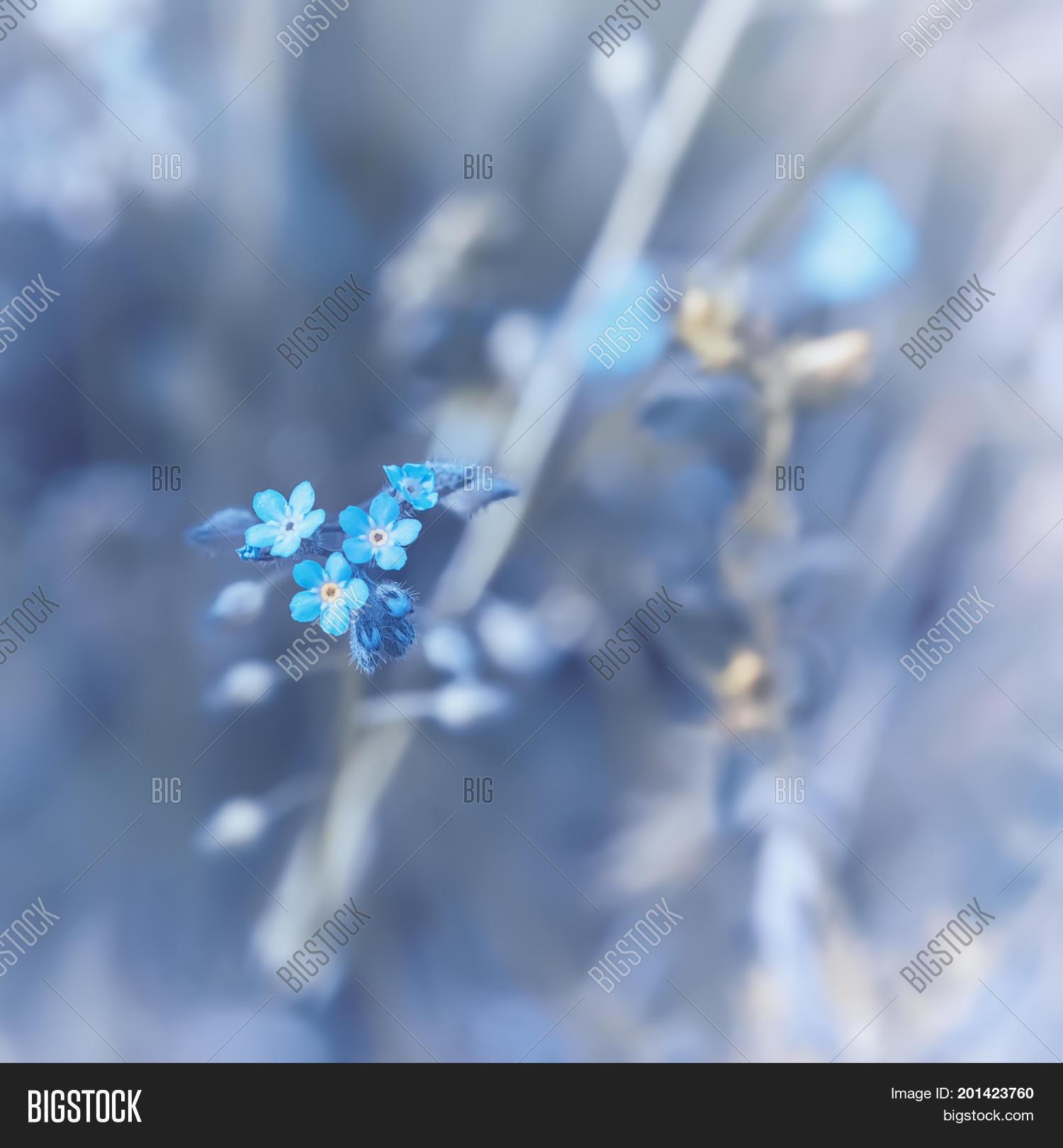 Small blue flowers image photo free trial bigstock small blue flowers closeup of a woodland forget me not myosotis sylvatica izmirmasajfo