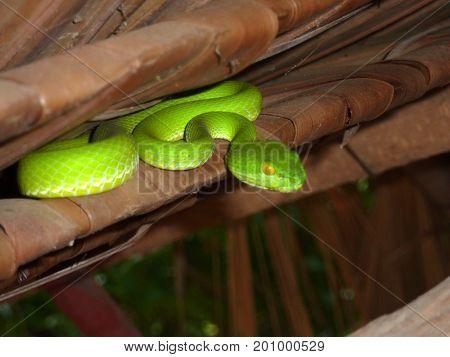 Serpent vert - Parc national Khao Yai - Thaïlande