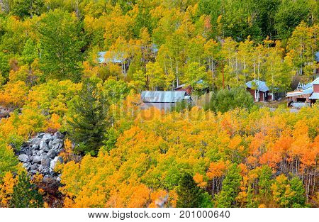 Valley of autumn trees in California Sierra mountains