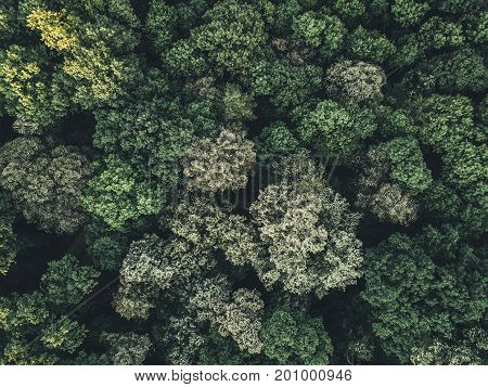 Aerial view of the forest and tips of trees